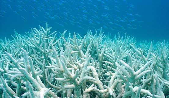 Acidification: Great for the earth's atmosphere,...