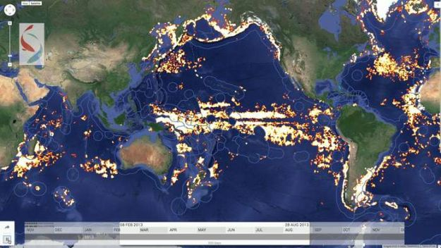 How Google tracked illegal fishing over 1.4 billion...